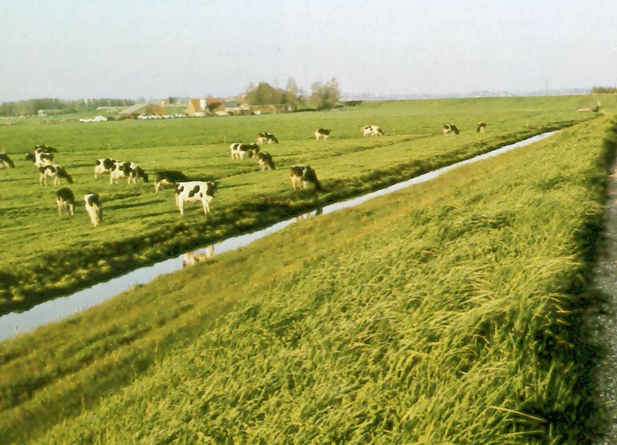 Diekman-landschapsarchitecten_-Vuilstort-Nauerna_-koeien