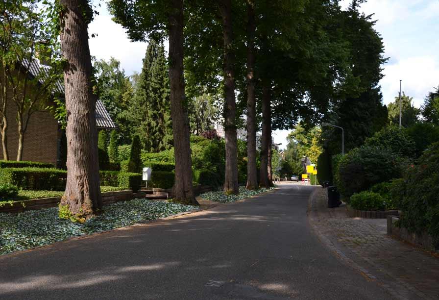 Diekman-landschapsarchitecten_Boomberg-Hilversum_-transformatie-woonstraten_Lindenheuvel