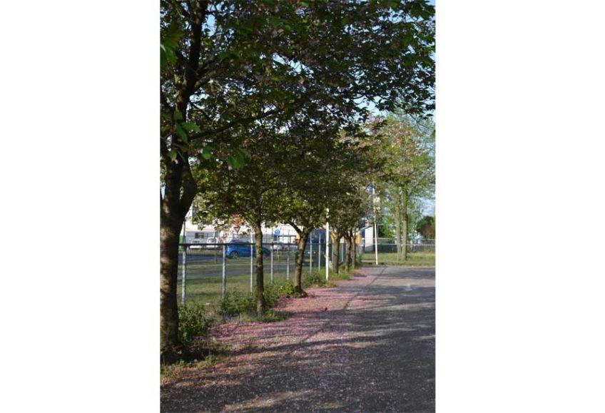 Diekman-landschapsarchitecten_bedrijventerrein_transformatie_AmsterdamZO_Amstel-Gateway_parkeerterrein_bloesumbomen-848×579