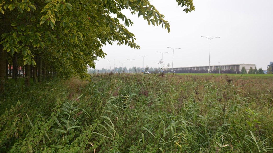 Diekman-landschapsarchitecten_duurzame-landcshapsarchitectuur_spectrumdreef_almere-1140×640
