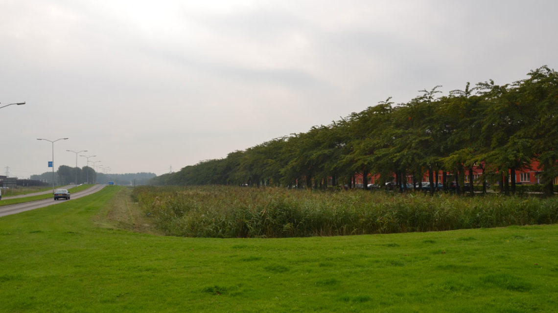 Diekman-landschapsarchitecten_duurzame-landcshapsarchitectuur_spectrumdreef_almere_buffer-1140×640