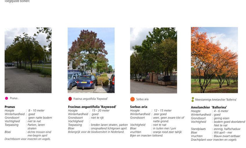 toe-te-passen-bomen-Gateway-1-848×511