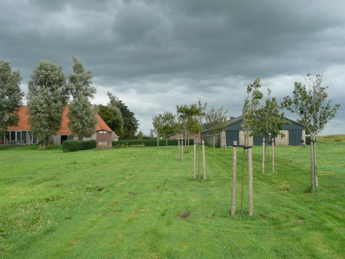 Diekman-landschapsarchitecten_boerenerf-Lemmer_lamel-van-fruitbomen
