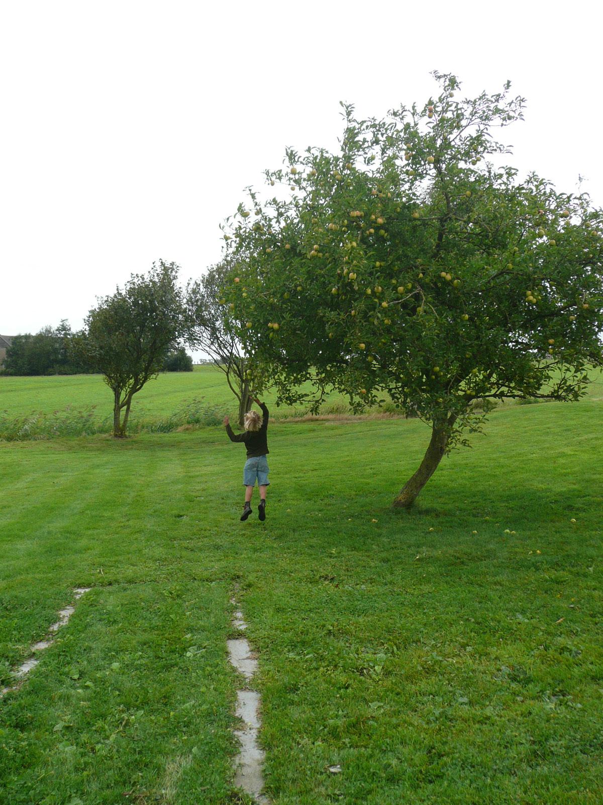 Diekman-landschapsarchitecten_fruitboom